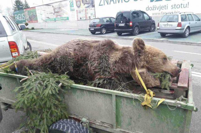ГДЈЕ НЕСТАЈУ ЛОВАЧКИ ТРОФЕЈИ ИЗ БОСНЕ И ХЕРЦЕГОВИНЕ: Шта зна медвјед шта је граница!