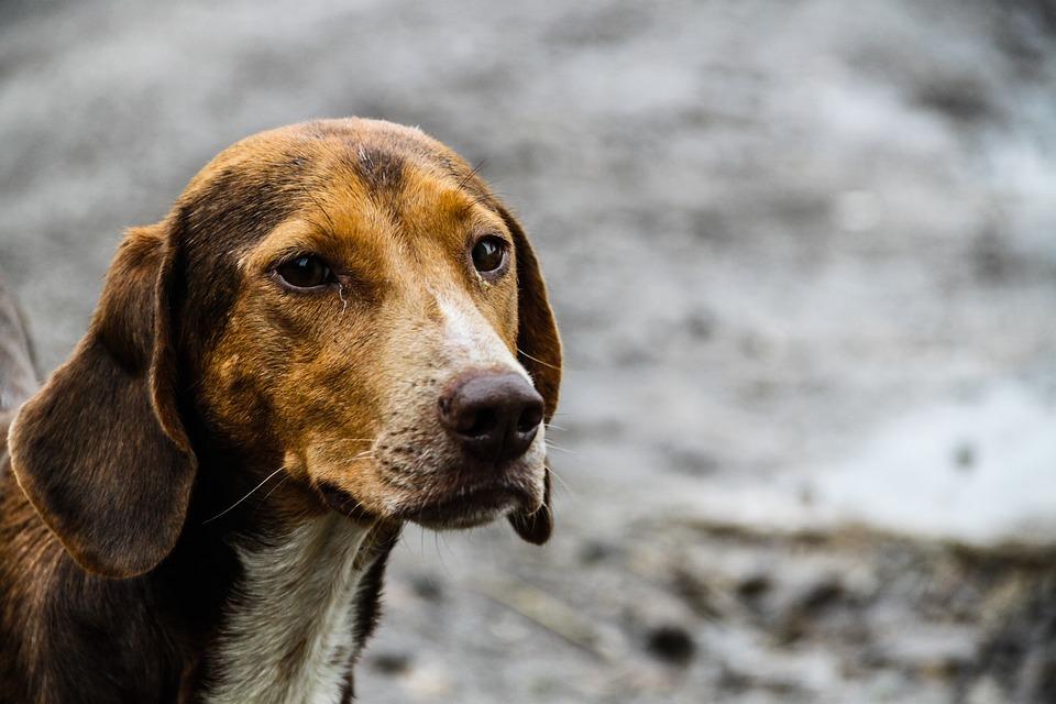 Ko je pse učinio lutalicama?