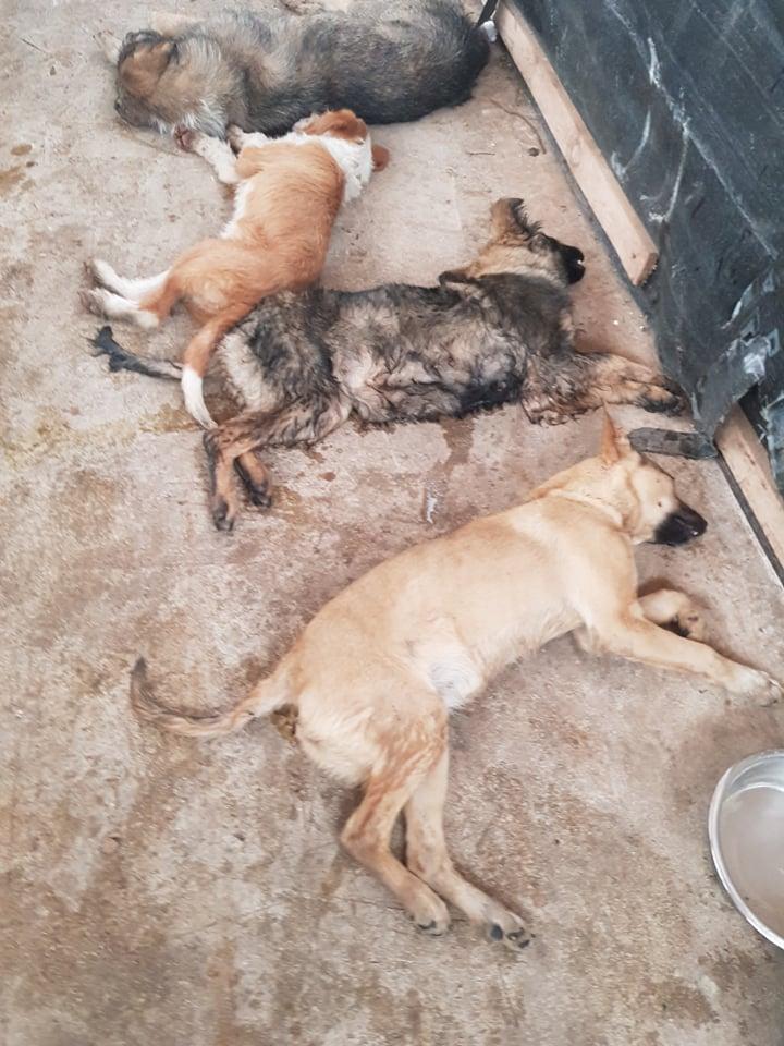 ALARMANTNO UPOZORENJE ZENICI: Prestanite s ubijanjem pasa!